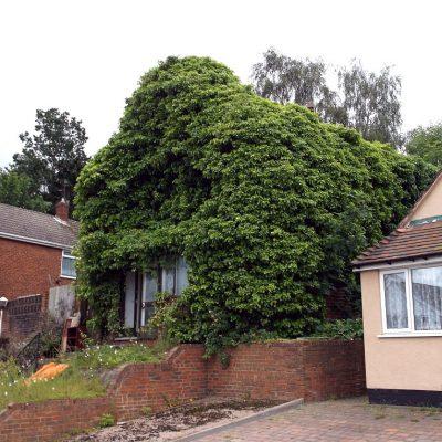 Overgrown House Blights Neighbourhood